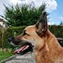chien vétérinaire balter Poissy