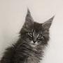 chat vétérinaire balter Poissy